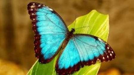 خلق رنگ بال پروانه و طاووس با فناوری نانو