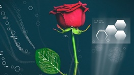 ابداع موفقیتآمیز اولین گل رز طبیعی-دیجیتالی جهان