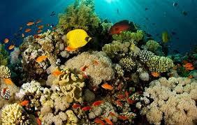 بررسی علمی صخره های مرجانی