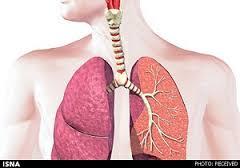 حقایقی شگفت انگیز درباره دستگاه تنفس
