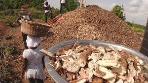 تولید قارچ خوراکی از ضایعات غذایی در غنا