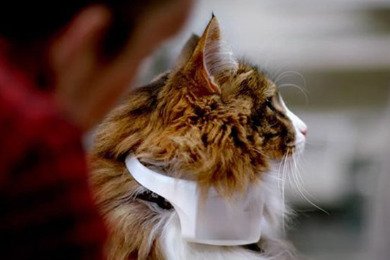 قلادهای که صدای گربهها را ترجمه میکند
