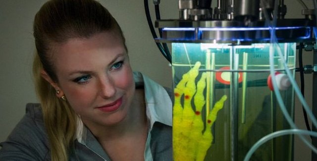 پرورش استخوان دست انسان در آزمایشگاه