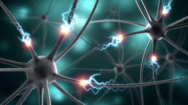 سلولهای مغز سن افراد را نشان میدهند