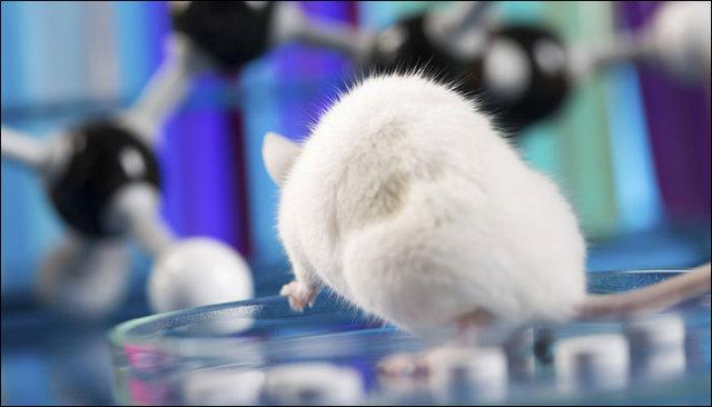 دانشمندان موشها را مثل کرم شبتاب روشن کردند