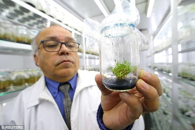کشف مولکولهای گیاهی فیلترکننده تشعشعات خورشیدی