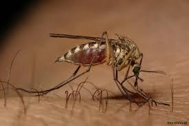 راهی تازه برای کشتن پشه های ناقل مالاریا