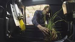 سی تی اسکن ریشه گیاهان برای بهینه سازی فرآیند جذب مواد غذایی و آب